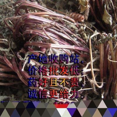 四川省广元市苍溪县中药材薄荷  干 野生紫茎薄荷,够含量