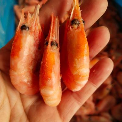 这是一张关于北极虾 的产品图片