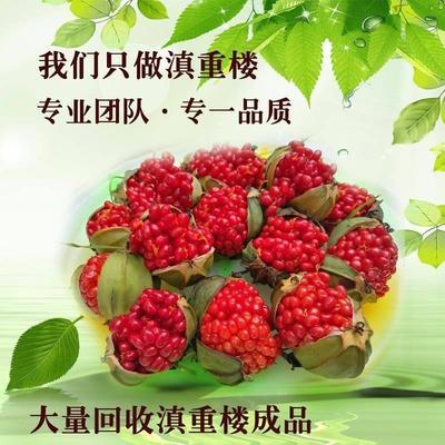 这是一张关于云南滇重楼  重楼种子发芽率95%的产品图片