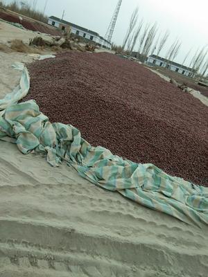 新疆维吾尔自治区喀什地区麦盖提县新疆红枣 统货
