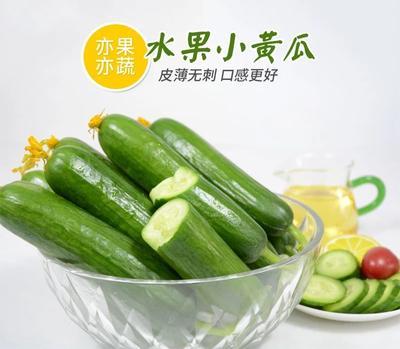 这是一张关于水果黄瓜 15~25cm 的产品图片