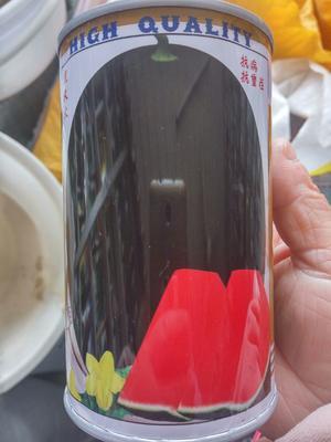江苏省宿迁市沭阳县巨星金刚黑皮西瓜种子 二倍体杂交种 ≥85%
