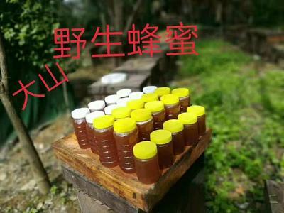 广西壮族自治区桂林市全州县野生蜂蜜 玻璃瓶装 1年 100%