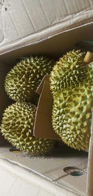 广西壮族自治区崇左市凭祥市金枕头榴莲 2 - 3公斤 50 - 60%以上
