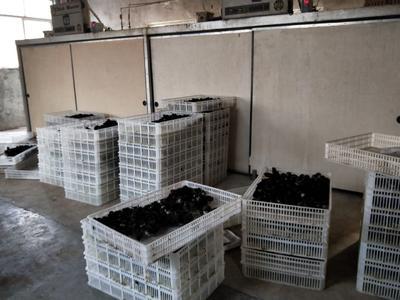 上海闵行区黑鸡苗