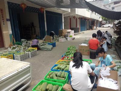 福建省三明市尤溪县台湾丝瓜 30cm以下