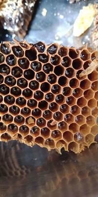 广西壮族自治区玉林市博白县土蜂蜜 塑料瓶装 2年以上 100%