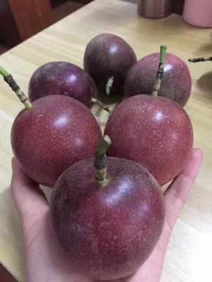 这是一张关于紫香一号百香果 70 - 80克 的产品图片
