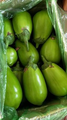 辽宁省鞍山市海城市绿茄霸茄子 40cm以上 圆茄