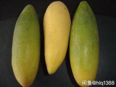 这是一张关于香蕉百香果苗 的产品图片