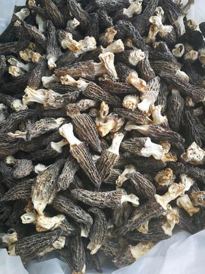 云南省昆明市官渡区羊肚菌 干货 3cm~6cm 尖顶 灰黑色 人工种植