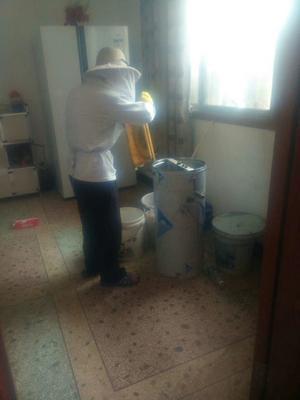 湖南省长沙市浏阳市土蜂蜜 塑料瓶装 2年以上 100%
