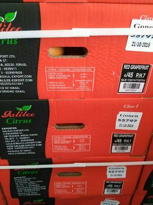 广东省广州市白云区西柚 5斤以上