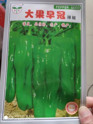 这是一张关于大果早冠薄皮灯笼椒 杂交种 ≥80% 的产品图片