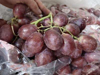湖南省长沙市雨花区红提 2斤以上 5%以下 1次果