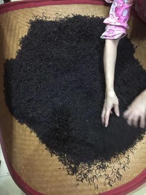 广东省潮州市饶平县单枞茶 一级 罐装