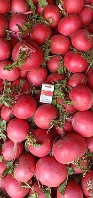 吉林省四平市公主岭市红皮萝卜  1.5~2斤 延薯四土豆,常年供应