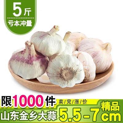 山东省济宁市金乡县金乡大蒜 5.5-6.0cm 多瓣蒜