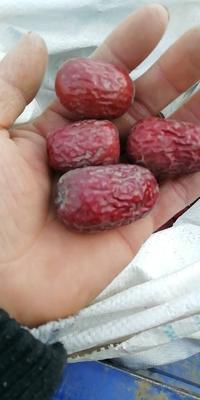 这是一张关于新疆红枣 一级 的产品图片