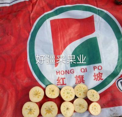 广西壮族自治区南宁市青秀区阿克苏冰糖心苹果 85mm以上 条红 光果