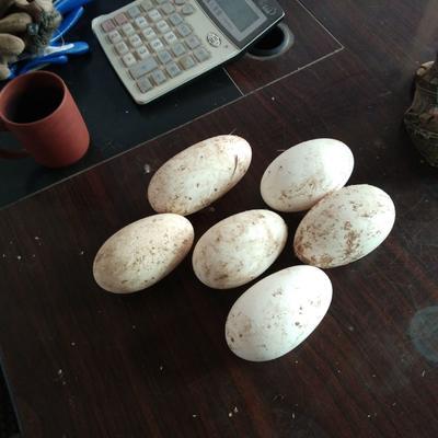 山东省聊城市高唐县大三花鹅蛋 食用 散装