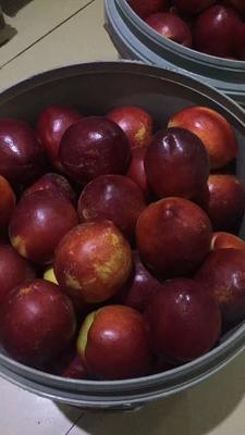 山东省潍坊市青州市黄油桃 4两以上 55mm以上