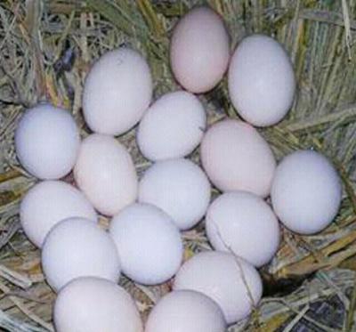 这是一张关于土鸡蛋 食用 礼盒装 的产品图片