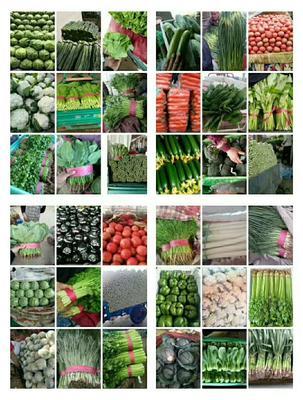 这是一张关于美冠油麦菜 25~30cm 的产品图片