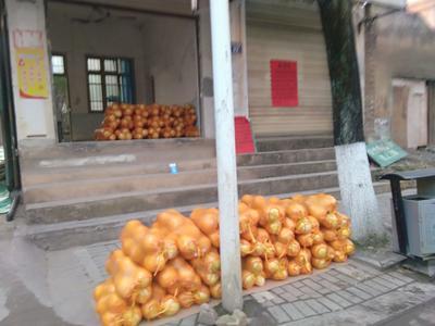 湖南省永州市新田县江永香柚 2.5斤以上