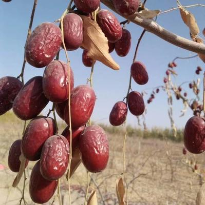 这是一张关于若羌红枣 一级 的产品图片