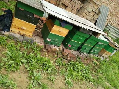 陕西省西安市临潼区百花蜜 塑料瓶装 2年以上 95%以上