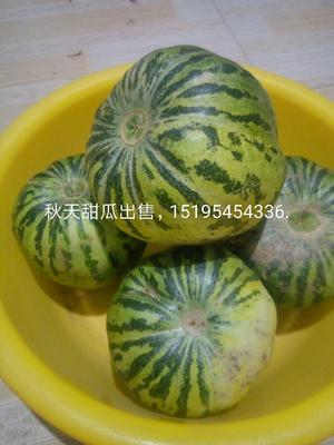 这是一张关于花蕾甜瓜 0.5斤以上 的产品图片