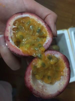 广西壮族自治区北海市紫香一号百香果 40 - 50克