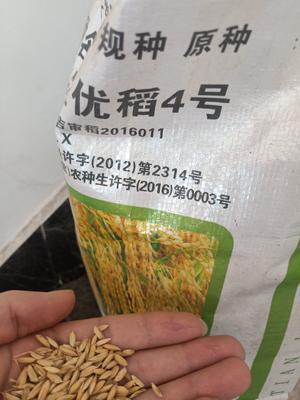 吉林省吉林市永吉县稻花香2号稻谷 中稻/一季稻