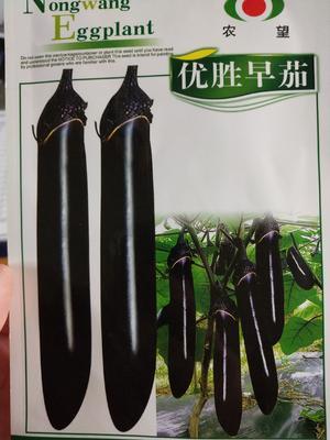 江苏省宿迁市沭阳县茄子种子 亲本 ≥90%