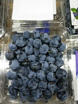 湖南省长沙市雨花区智利蓝莓 12 - 14mm以上 鲜果