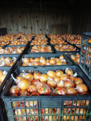 这是一张关于冰糖橙 55 - 60mm 4-8两 的产品图片
