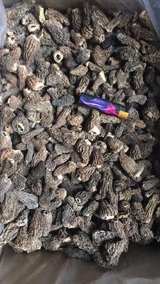 云南省昆明市官渡区羊肚菌 干货 3cm~6cm 尖顶 灰黑色 野生