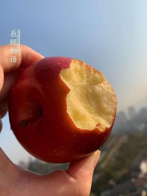陕西省榆林市榆阳区高原红苹果 60mm以上 统货 纸+膜袋