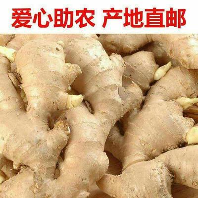 河南省焦作市博爱县姜种 2~4两 带土
