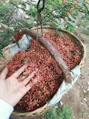 陕西省渭南市富平县大红袍花椒 一级 干花椒