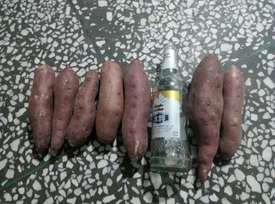 辽宁省锦州市凌海市商薯19号 混装通货 红皮 质量第一