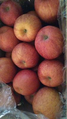 陕西省延安市宝塔区红富士苹果 80mm以上 条红 纸袋
