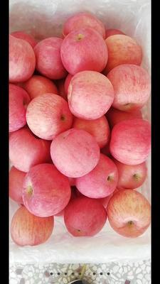 甘肃省平凉市静宁县红富士苹果 70mm以上 条红 纸袋