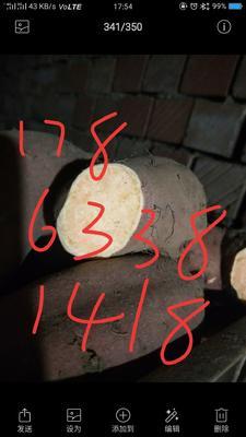 这是一张关于来福红薯 3两~6两 黄皮 的产品图片