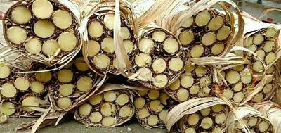 广西壮族自治区贵港市港南区木格白玉蔗 3 - 4cm 3m以上