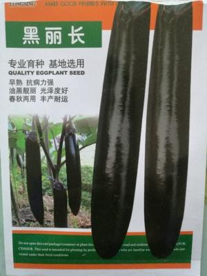 四川省绵阳市江油市茄子苗