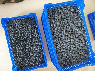 江苏省连云港市赣榆区蓝丰蓝莓 8 - 10mm以上 鲜果