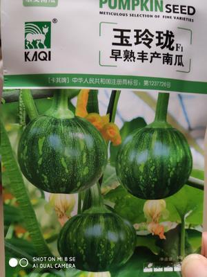 江苏省宿迁市沭阳县玉玲珑早熟丰产南瓜 85%