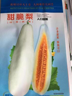 山东省济南市槐荫区羊角蜜甜瓜种子  常规种(原种) ≥90% 白羊角蜜甜脆梨种子